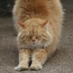 С чем связаны изменения в характере старой кошки.