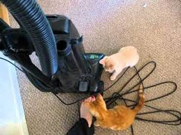 коты и пылесос