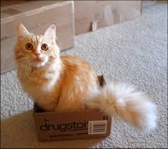 кот рыжий коробка