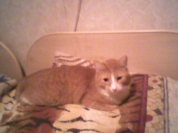 Встреча котенка Боба и бездомного музыканта Джеймса Боуэна!
