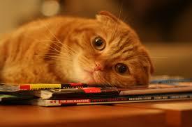 рыжий кот на журнале лежит