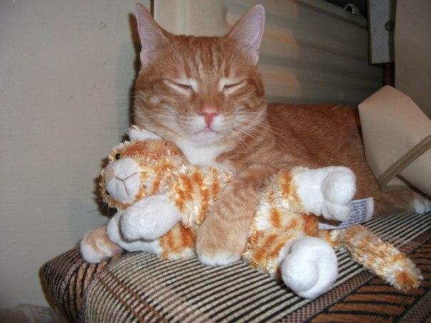 Фотоподборка очаровательных рыжих котиков :)