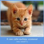 Как рыжий кот Тиша сам нашел хозяев!