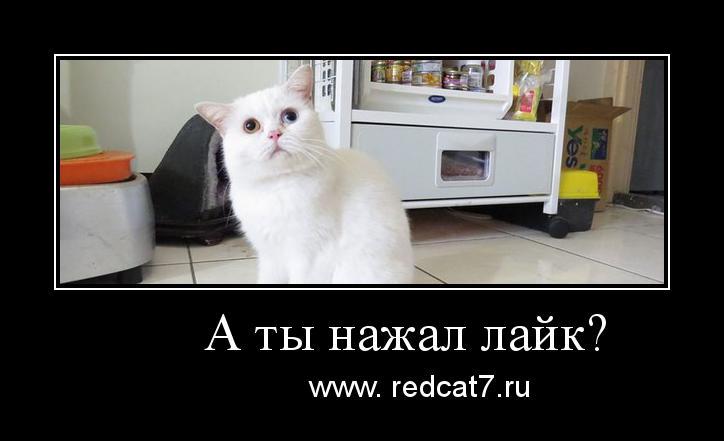 мотиватор-белый-котенок-53453543