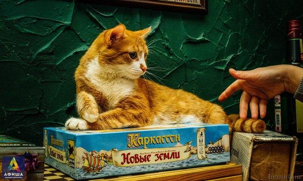 Фотоподборка очаровательных рыжих котиков :) 1