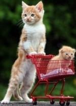 Как определить пол котенка? 4 способа!