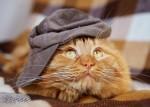 Смешной рассказ про рыжего кота. Рыжий ангел!