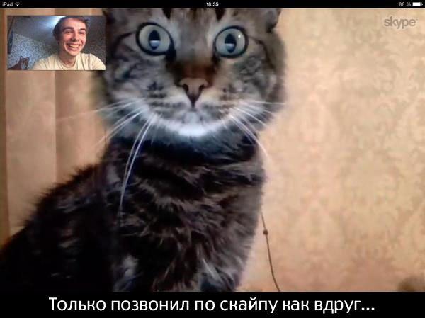 кот в скайпе забавный смешной