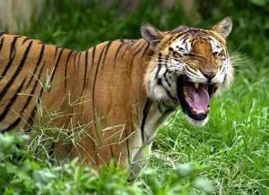 Кошка которая ест людей