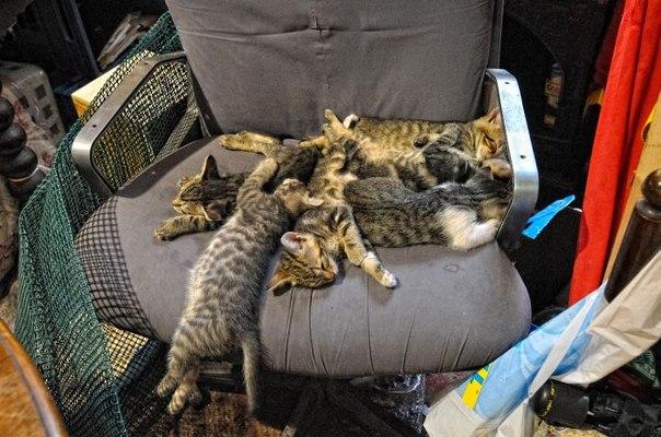 котята спят в кресле смешно, котята всем нравятся