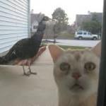 Любимого павлина премьера съел кот! Новость!