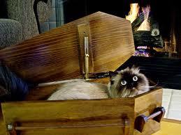 Почему кошки лезут в гроб?