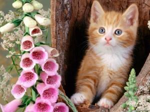 Гамавит форте для кошек и котов.