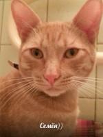 Противовирусные препараты для котов
