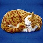 Полосатые мурлыки — почему кошки мурлыкают?