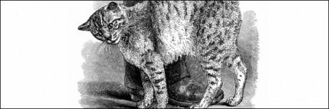 кот трется о ногу человека