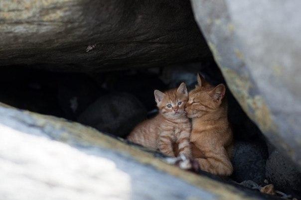 Вакцинация кошек от лишая
