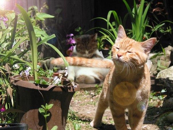 кот рыжий гуляет и растения цветы