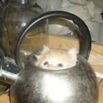 Любопытные факты о кошках.