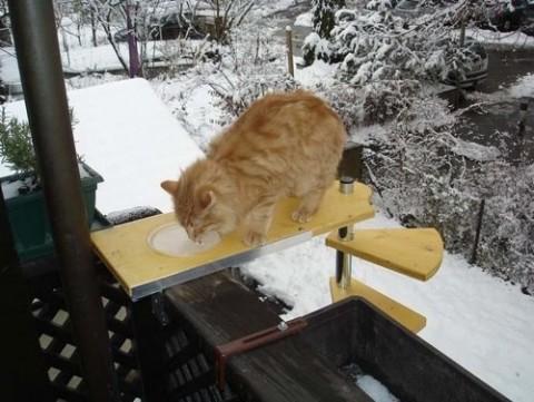 кот рыжий кушает корм