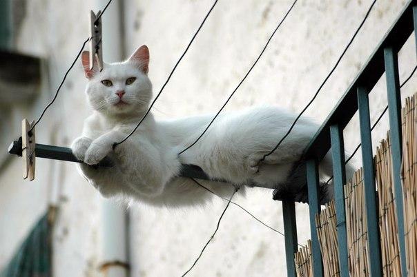 белая кошка красивая