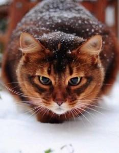 кошка на снегу