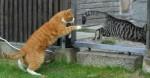Химическая кастрация котов препараты