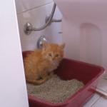 Чтобы кот не метил - препараты