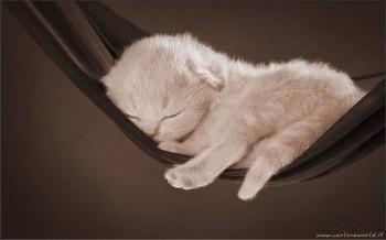 блаженный-маленький-котенок-спит