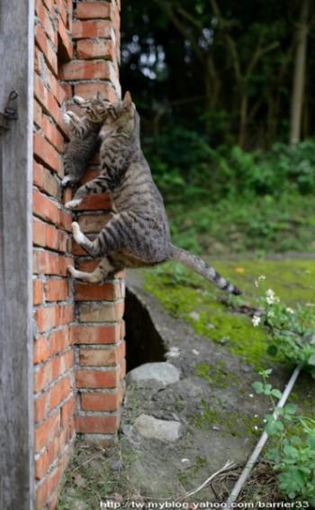 мама кошка тащит котенка домой за щирку по каменной стене