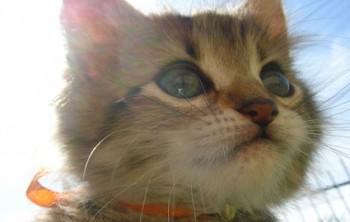 маленький котенок смотрит мило