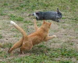 кот рыжий бежит за зайцем