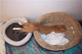 препарат настойка кот баюн отзыв