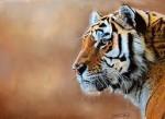 Тигры — идеальные охотники.