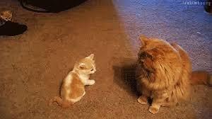 Гамавит форте для кошек.