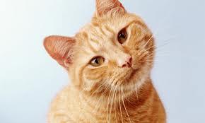 Ты дашь мне Гамавит Форте для кошек?