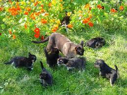 коты гуляют на природе