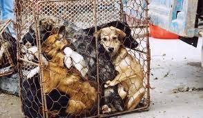 китайцы едят собак