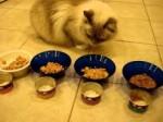 Можно ли кошкам консервы рыбные?