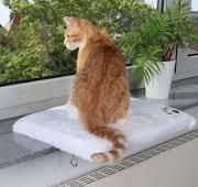 лежак для рыжего кота