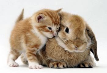 рыжий котенок и рыжий кролик милые сидят рядом