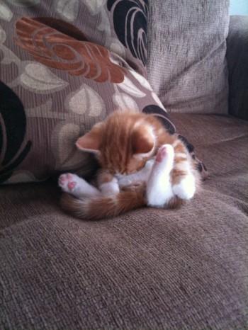 рыжий котенок спит странно сидя
