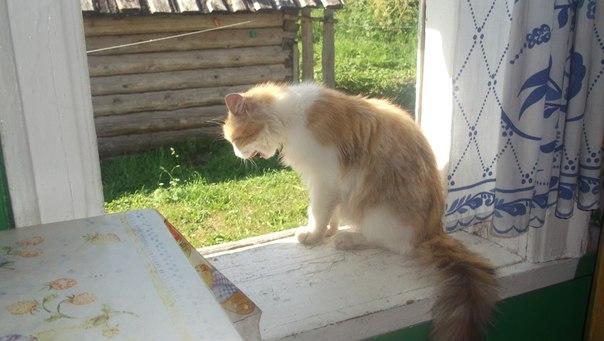 кошка-на-окне-летом-в-деревне