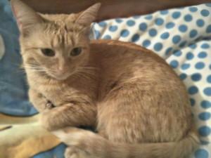 кот рыжий фото