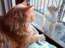 рыжий кот и белка