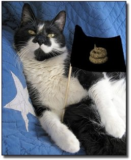 кот-флаг