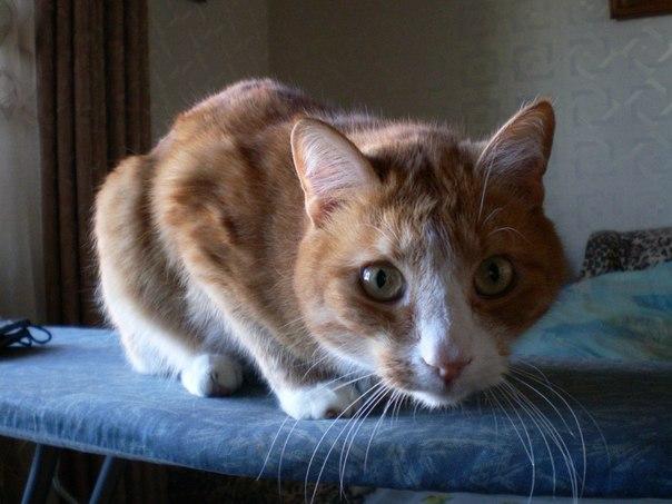 кот-рыжий-на-стиральной-доске