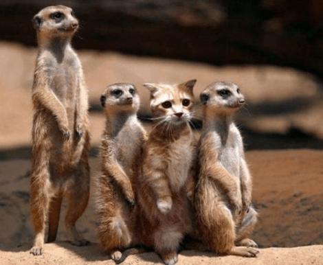 кот и суслики смешные