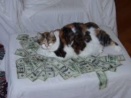 кот-жирный-и-доллары-забавно фото