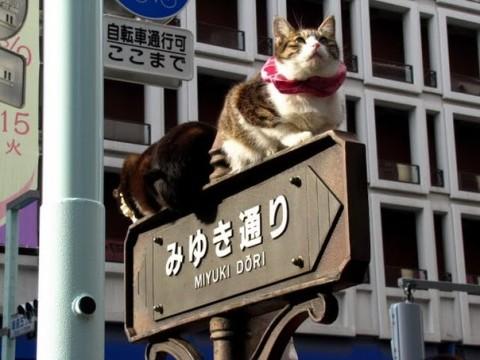 коты-на-знаке